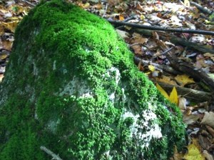 A lovely, moss-covered rock I encountered on my walk today.  Photo by Grey Catsidhe, 2014.