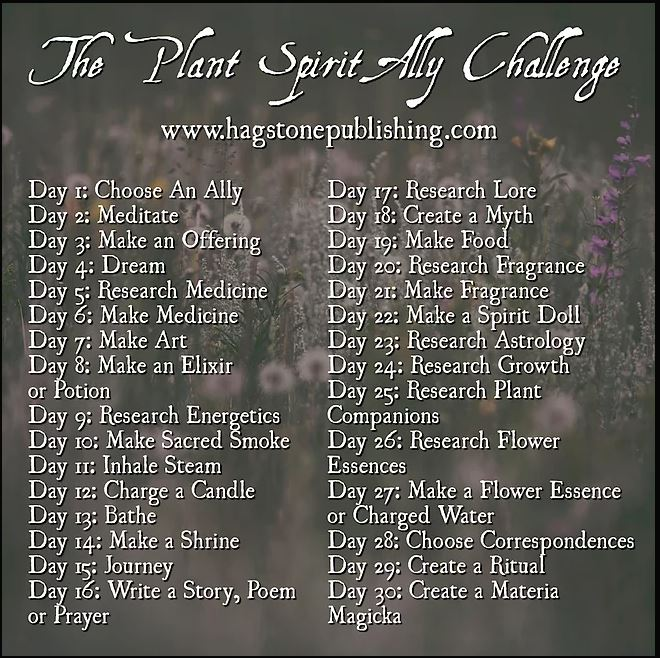 Plant Spirit Ally Challenge: Day 2 -Meditate | The Ditzy Druid